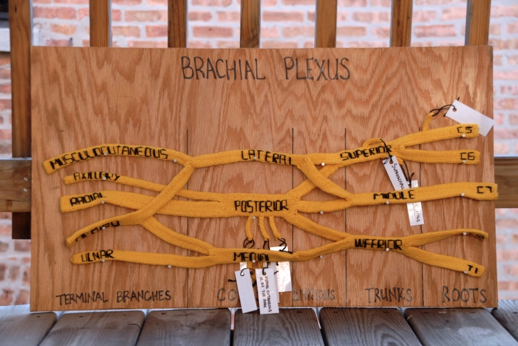 brachial plexus during golden hour